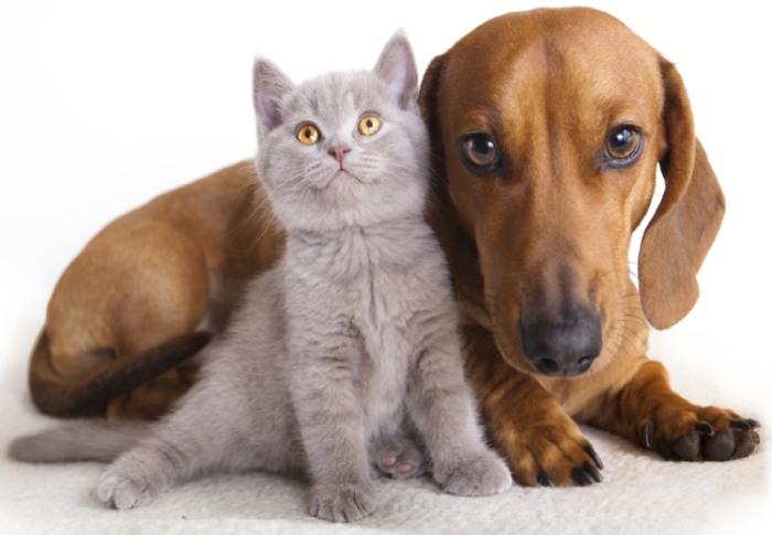 Köpeklerin Kedilere Neden Saldırır