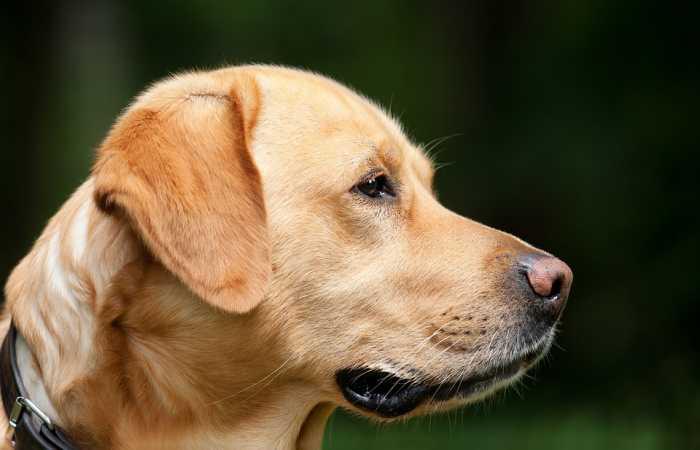 Evcil Hayvanınızı Herhangi Bir Yere Götürürken Yapmanız Gerekenler