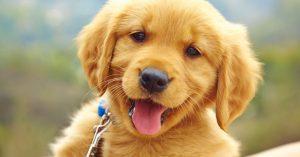Evcil Hayvanlara Özel Pet Taksi Ücreti