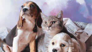 Pet Takside Kullanılan Araçların Özellikleri