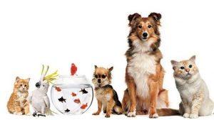 Veterinere Gideceğiniz Zaman Pet Taksi Kullanın