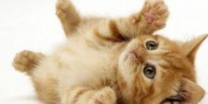 Evde Kedi Bakımı Nasıl Olmalı?