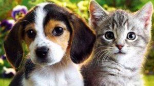 Kedi Ve Köpek Aynı Evde Yaşar Mı?