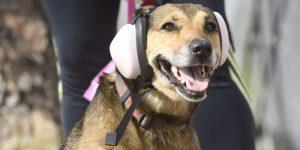 Pet Taksi Hizmetinde Müşteri Odaklı Anlayış