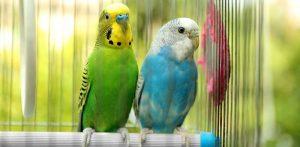 Rahat ve Konforlu Ulaşım Hayvanların da Hakkı