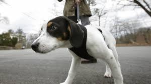 Evcil Hayvanlar Günde Kaç Kez Yürüyüşe Çıkarılmalı?