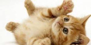 Hasta Hayvanlar İçin Pet Nakli Yapılır mı?