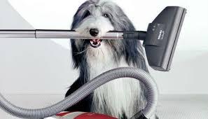 Köpek Taşımacılığı Hizmeti Alacaklara Tavsiyeler