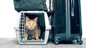 Kedi Taşımacılığında Nelere Dikkat Edilmeli?