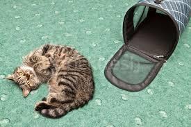 Kedileri Sakinleştirme Yöntemleri