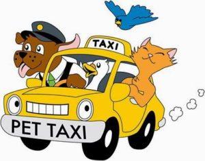 Pet Taksi Hizmetlerinde Firmalar Hangi Konulara Dikkat Etmeli?