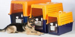 Toplu Pet Taksi Taşımacılığında Kaç Hayvan Nakli Yapılır?