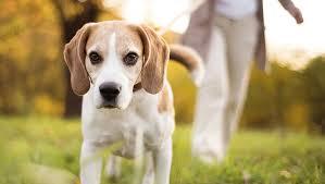Evcil Hayvanları Dışarıya Çıkarmanın Faydaları