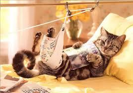 Kedilerde Yaşanan Apse Sorunu Nedir?