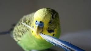 Tüy Döken Kuşlara Ne Yapılmalı