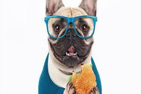 Köpeklerin beslenmesinde tıpkı insanlar gibi belli başlı temel gıdalar vardır ki;  daha sağlıklı köpek dostlarımıza ne yedirmeliyiz bu noktada önem taşımaktadır. Bunlar yağlar, karbonhidratlar ve proteinlerdir. Bu gruplar köpeğin sağlıklı kalabilmesi için gerekli olanlardır. Katı gıda bir köpek için ne kadar gerekliyse günlük gerekli su miktarı alması da bir o kadar önemlidir. Aldığı besinin 2,5 katı su içmelidir. Köpeğin Beslenmesi Özen İster Bir köpeğin beslenmesi özen ister ki bu yüzden daha sağlıklı köpek dostlarımıza ne yedirmeliyiz seçenekleri dikkate alınmak zorundadır. İnsanlardan kalan yemeklerin köpeğe verilmesi onun doğru beslenmesi demek değildir. Köpeklerde sindirim sistemi son derece hassas olduğundan sağlıklı ve besleyici olarak beslenmesi önem taşır. Sağlıksız besinler köpeğin doğrudan sindirim sistemini olumsuz etkiler. Köpeklere köpek maması dışında yiyeceklerde verilebilir. Ancak verilen bu yiyeceklerin faydalı olması da durumun önemli olan kısmıdır. Köpek maması dışında balık, marul, ıspanak, pirinç, muz ya da et ürünleri verilebilir. Bunlar faydalı olan besinlerdir. Ancak koşul her ne olursa olsun uzak tutulması gereken yiyecekler vardır ki bunların başında çikolata, soğan ve sarımsak içeren besinler gelir. Badem ve kerevizden de uzak tutulmalıdır. Köpekler Ve Kaliteli Kuru Mama Seçimi Köpekler beslemek için aslında en hijyenik ve sorunsuz yol kuru mamalardır. Kuru mamalar artık günümüzde gerek veterinerde gerek pet hoplarda gerekse marketlerde rahatlıkla temin edilebilmektedir. Kuru mamalar her zaman için köpeklerin sağlıklı ve dengeli beslenmesini sağlar. Ancak kuru mama seçiminde de kaliteli ve vitaminleri açısından dengeli mama seçimi işin önemli kısmıdır. Günümüzde can dostlar olan köpeklere birçok çeşitte kuru mama bulmak mümkün olup; her mama kategorisinde ırk, yaş özelliklerine göre çeşitlidir. Aynı zamanda köpekler her mamayı sevmek zorunda da değildir. Damak zevkine göre beğeneceği mamayı tespit etmek onun sağlığı ve dengeli beslenmesi
