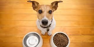 Evcil Hayvanlarda Beslenme Nasıl Olmalı?