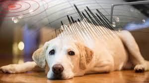Evcil Hayvanların Depreme Karşı Tepkileri Nelerdir?