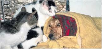 Evcil Hayvanlarla İlgili Bilinmesi Gerekenler