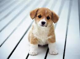 Evcil Hayvanı Olanlar Pandemide Nelere Dikkat Etmeli