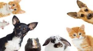 Evcil Hayvanlar Korona Virüs Taşır Mı?