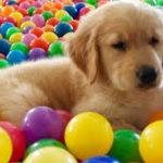Evcil Hayvanlarda Virüs Olduğu Nasıl Anlaşılır?