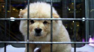 Karantinadaki Kişiler Evcil Hayvanlarına Korona Virüs Bulaştırır Mı? Covid- 19 Hayvanlara Bulaşır Mı?