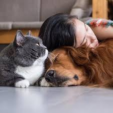 Pandemi Sürecinde Uzmanlardan Evcil Hayvan Sahiplerine Öneriler