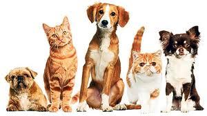 Pandemiden En Çok Etkilenen Evcil Hayvanlar