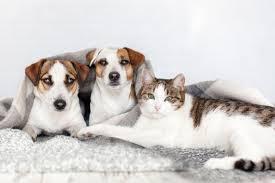 Tatil Dönüşü Pet Taksi Hizmeti
