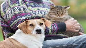 Evcil Hayvanlardan Bulaşan Hastalıklar