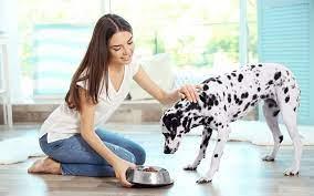 Evcil Hayvanların Sağlıklı Beslenmesi