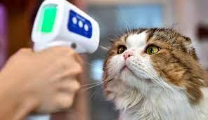 Hayvanlarda FIP Hastalığı