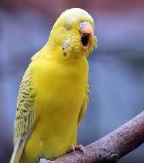 Kuşlarda Kusmanın Nedenleri