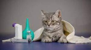 Hasta Kediye Ne İyi Gelir?