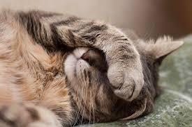 Kedilerin Gözü Neden İltihaplanır