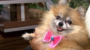 Köpek Viral Hastalıkları