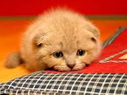Yavru Kediler Neden Ölür?