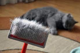 Kediler Neden Tüy Döker