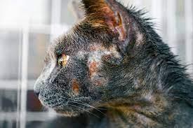 Evcil Hayvanlarda Saç Kıran Nedir?
