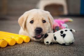 Köpeklerde Anal Kese