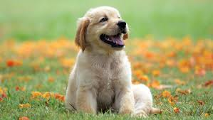 Köpeklerde En Çok Görülen Hastalıklar