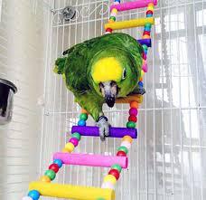 Kuş Ve Kafes Hayvancılığı Taşıma