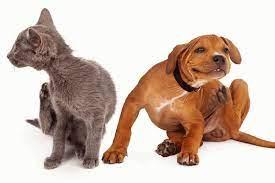 Kedi ve Köpeklerde Parazit Belirtileri